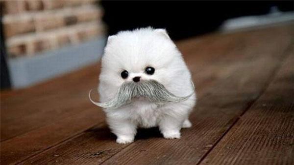 Puppy Bowl 2013 Mustache