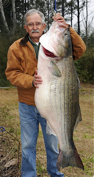 James Bramlett 70 pound striped bass